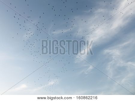 A flock of birds migrating above Lebanon.