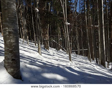 Winter forest , Deciduous forest in winter , White forest