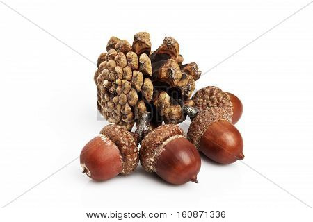 Pine cones and acorns on a white background