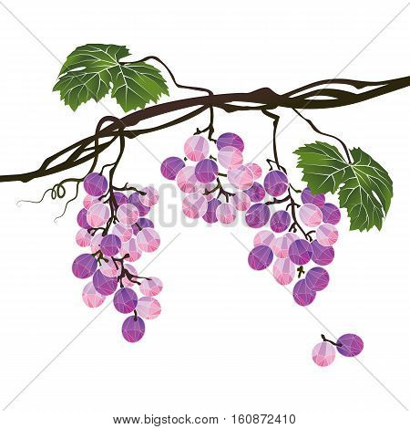 Stylized polygonal branch of purple grapes on white background