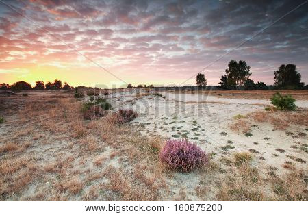 red sunrise over sand dunes and heather Germany