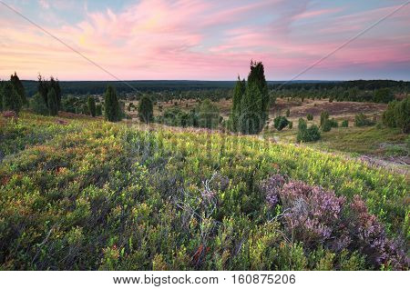 red summer sunset over flowering hills with heather Wilsede Luneburger heide