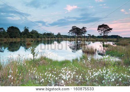 spring evening on wild lake Drenthe Netherlands