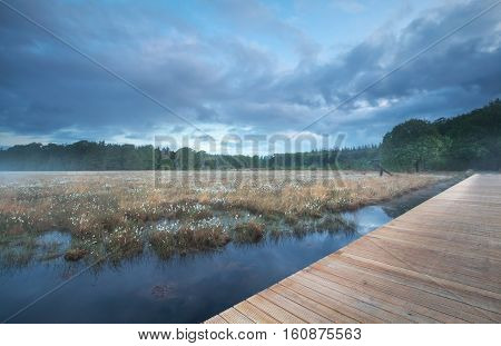 wooden path on swamp during spring misty morning