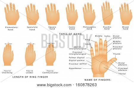 Names of the Fingers. Types of hands. Types of hands In Palmistry. Ring Finger Type - Your Personality. Name of fingers on a hand. Right hand with lines and their names on white background