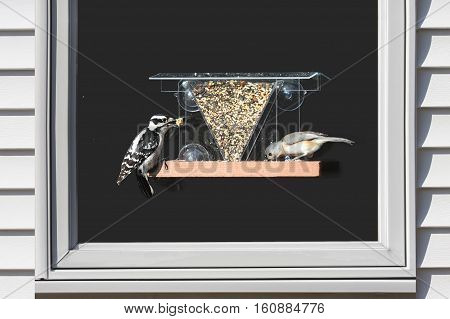 Downy Woodpecker (Picoides pubescens) and Tufted Titmouse (Baeolophus bicolor) on a window feeder