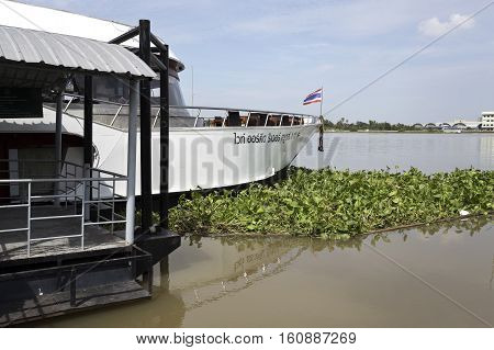 AYUTTHAYA, THAILAND - November 4, 2016: Water hyacinth or eichhornia crassipes trapped against the bow of a cruise boat docked at the pier on Chao Phraya River in Ayutthaya Thailand
