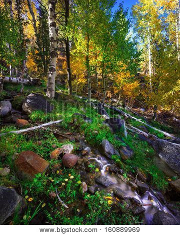 Autumn forest landscape in Hope Valley, accessible through Highway 89 in the Tahoe area in California.
