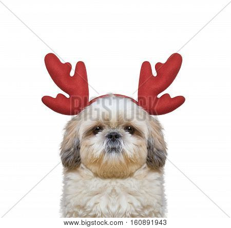Cute dog in reindeer antlers -- isolated on white