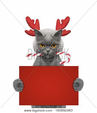 Cute cat in reindeer antlers holding a card with space for text -- isolated on white