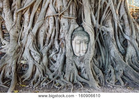 Ancient Buddha head Sculpture in the tree root at Wat Mahathat Ayuttaya province Thailand