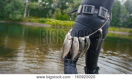 Spear fisherman shows Freshwater Fish on the belt of underwater fisherman after hunting in forest river, rear view, medium shot
