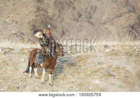 Bayan Ulgii Mongolia October 2nd 2015: Old eagle hunter with his Altai Golden Eagle on his horse