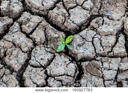 Crack soil on dry season Global warming / cracked dried mud / Dry cracked earth background