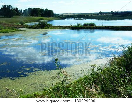 Green Slime In The Marsh