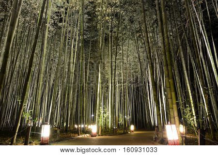 Lantern lights on a pathway in a bamboo grove during Arashiyama Hanatouro festival in Japan