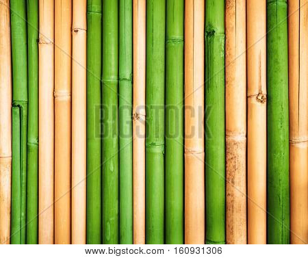 Bamboo texture background, Fresh green and dried yellow bamboo fence wall