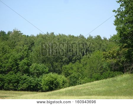 Canicular cloudless day, green hilly lawn and forest