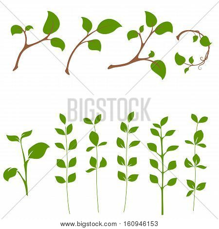 Sprouts herb and branch tree vector set isolated on white background to illustrate natural and healthy food. Green leaves.