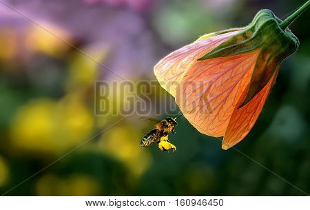 Bee on flower. spring flower with bokeh background close-up selective focus shallow