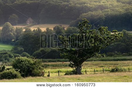 Beautiful landscape with lonely house in the background. Heron sitting on a large tree. Suburbs Exeter. Devon. England