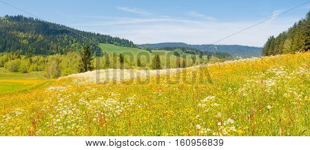 Alpine meadow with wild flowers on a bright summer joyful day. Filter soft light poster