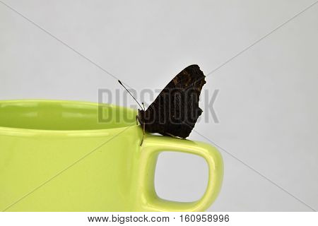 Butterfly Inachis io on a light green cup. Butterfly.