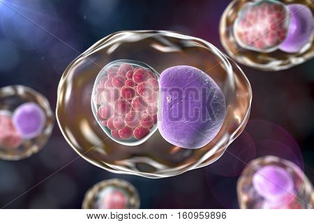 Chlamydia inclusion in human cell. 3D illustration showing group of chlamydial elementary bodies near the nucleus of a cell