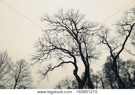 Leafless Bare Trees Over Gray Sky