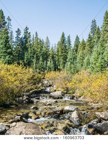 Autumn colors along Pine Creek in the Collegiate Peaks Wilderness Pike and San Isabel National Forests near Buena Vista Colorado.