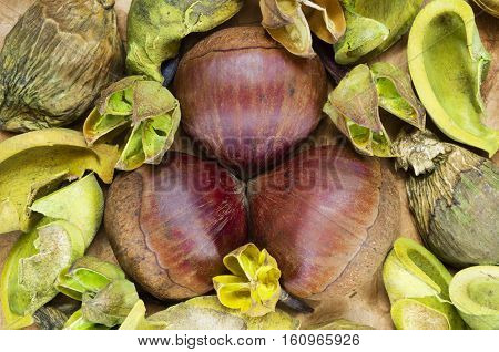 A background with fresh raw chestnuts and dried plants.