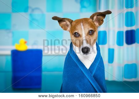 Dog In Shower  Or Wellness Spa