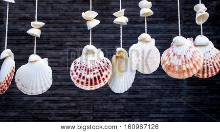 Sea shells hanging by rope as blinds