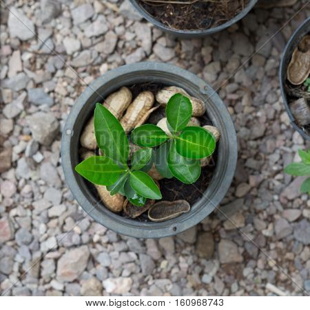 Young plants in plant pot from top view. Green leaf. Ecology concept. Green leaves. Green plant. Growing plant. Baby plant. Plant pot.