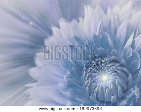 white-blue-grey blurred background. flower dahlia on the blurred background. floral composition. card for the holiday. Nature.