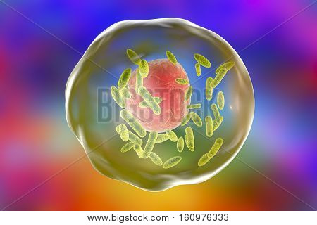 Bacteria Coxiella burnetii, small green, inside human cell, 3D illustration. Gram-negative bacteria which cause Q fever transmitted to humans by sheep, goats and cattle