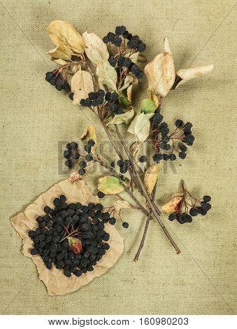Chokeberry aronia. Dried herbs for use in alternative medicine spa herbal cosmetics herbal medicine preparing infusions decoctions tinctures powders ointments butter tea bath.