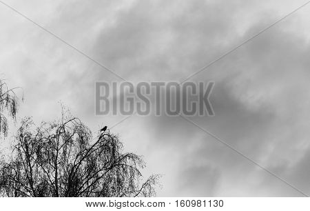 silhouette of a raven on top of the tree against the background of a stormy sky.