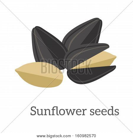Illustration of sunflower seeds. Ripe sunflower seed in flat. Several sunflower seeds. Healthy vegetarian food. Isolated vector illustration on white background.