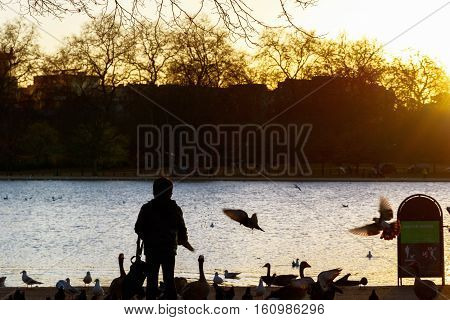 Silhouette of a kid feeding wild birds in Hyde Park London during sunset