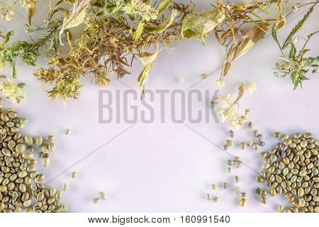 Various dried cannabis leaves and seeds on a white plate