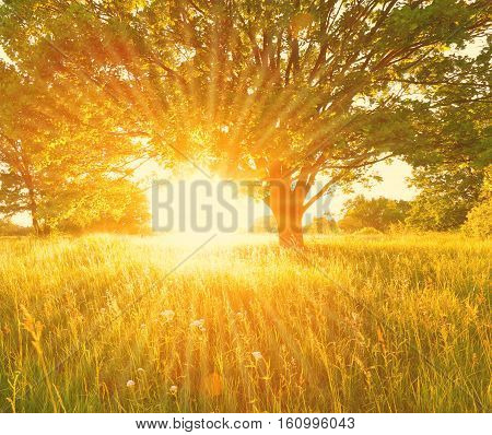 Colorful summer background with sun beams. Bright Summer morning landscape. Sun beams illuminate summer meadow in the morning.