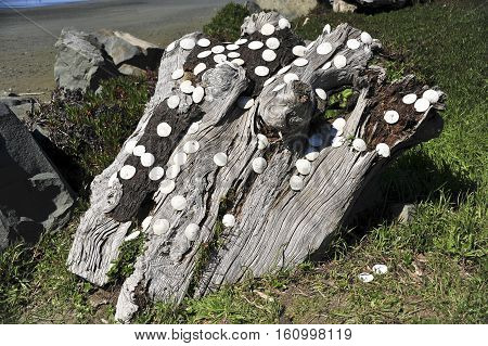 This is a photo of sea shells.