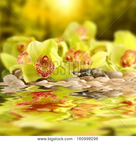 The Background Of The Beautiful, Alive, Fresh, Beautiful And Delicate Orchids.
