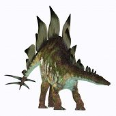 Stegosaurus Dinosaur on White 3D Illustration - Stegosaurus was an armored herbivorous dinosaur that lived in North America during the Jurassic Period. poster