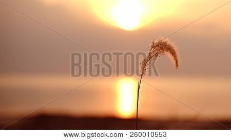 Sunset. Beautiful Sunset Baltic Sea. Sunset With Weed On The Front With Bokeh Background Sunset. Pai