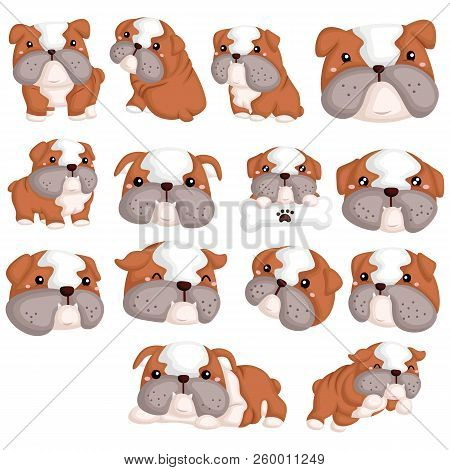 A Bulldog Vector Set With Many Poses