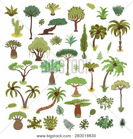 Collection Of Tropical Trees, Palms And Other Tropical Exotic Plants Vector Illustration Set. Lush F