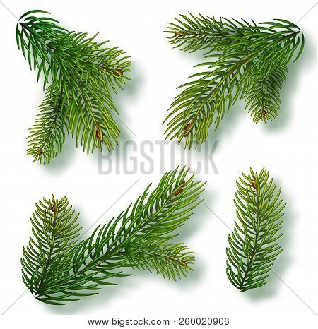 Christmas Tree Branches Set For A Christmas Decor. Branches Close-up. Collection Of Fir Branches. Re