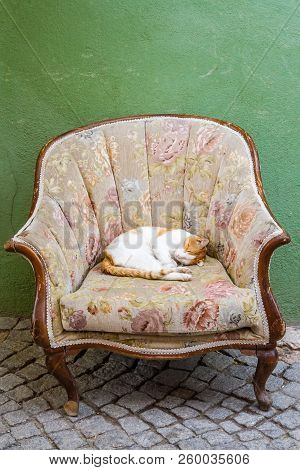 Ginger Cat Sleeping On Sofa Chair In Front Of A House
